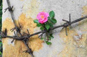 Dornen und Blume - Tod und Auferstehung
